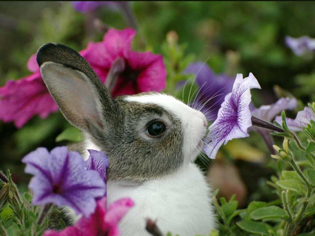 Happy Spring Bunny is Happy!